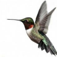 Google's hummingbird – a new search algorithm for the search engine